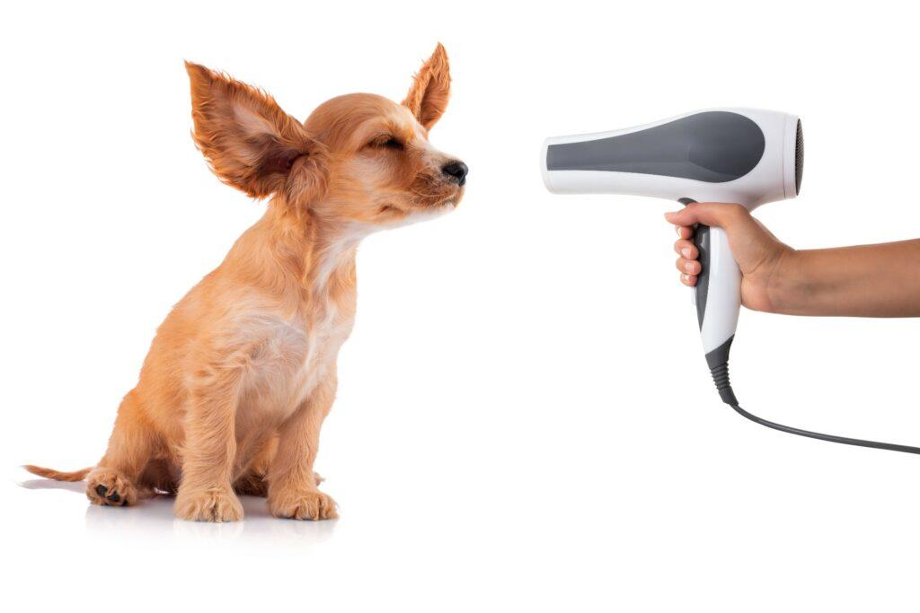 stress free Dharma dog grooming