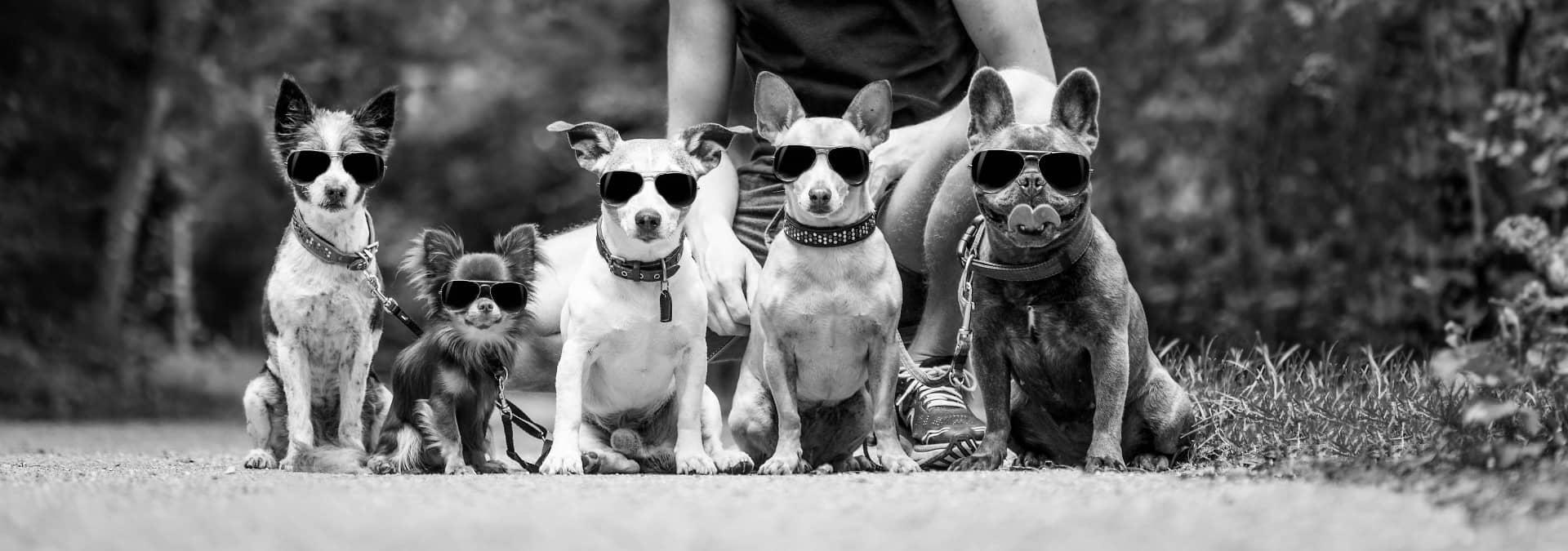 Dharma Dog training services
