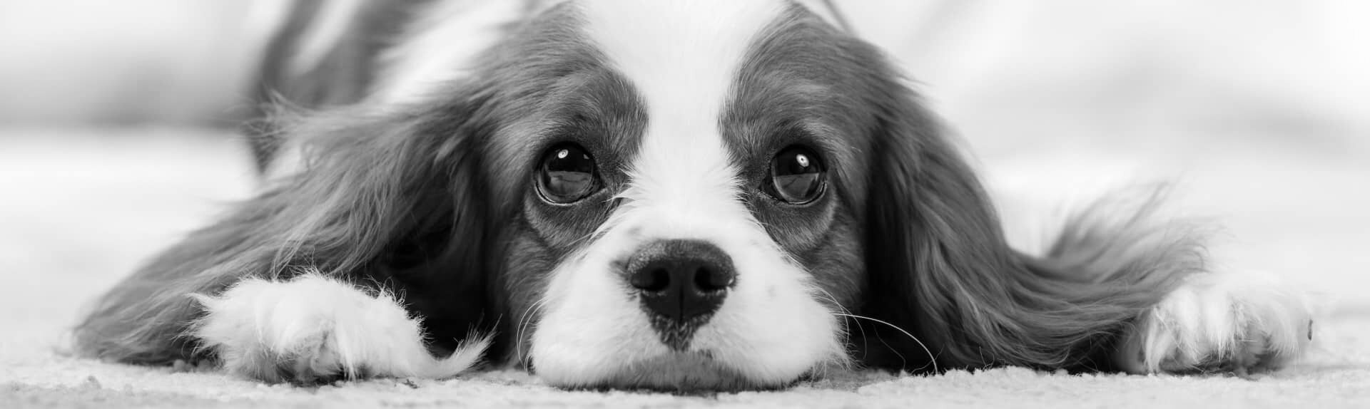 FAQ Dharma Dog Grooming services